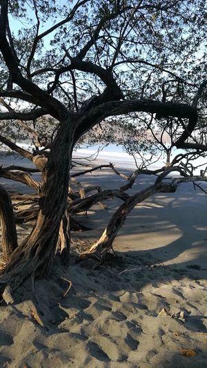 Fgugal Beach Tree Nature