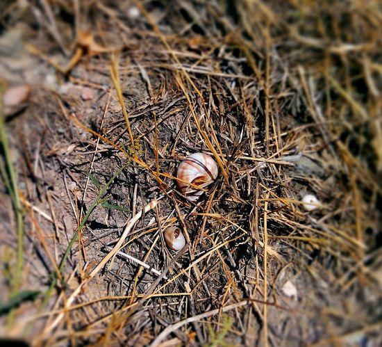 Salyangoz Snail Check This Out Taking Photos Walking Around