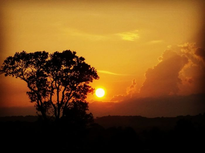 Sunset Evening Sky Skyporn Country Life Tree Nature Photography Perfectnature England Silhouette Goldensky Evening Sun