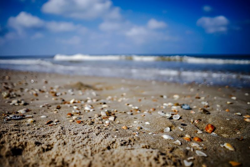 Muscheln am Meer Water Beach Sea Land Sky Sand Horizon Beauty In Nature Horizon Over Water Selective Focus Surface Level No People Stay Out