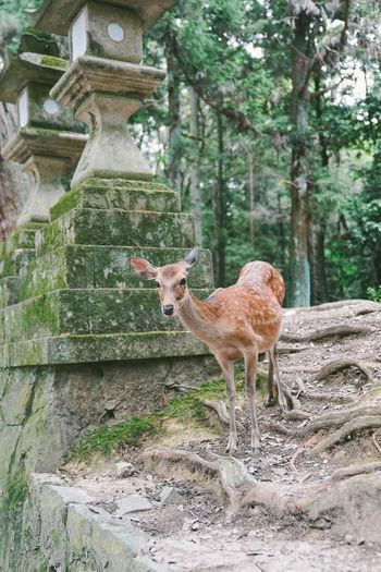 Deer standing on tree trunk