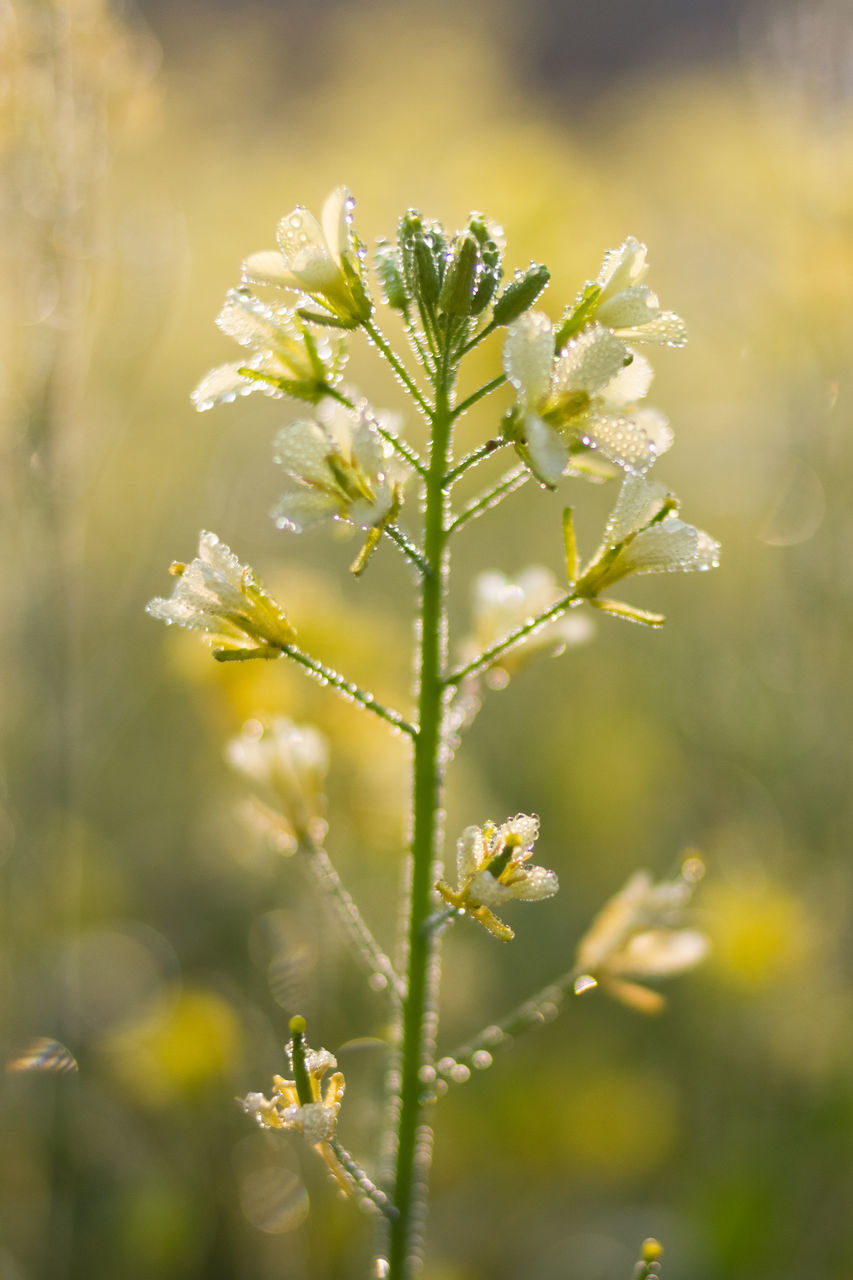nature, flower, plant, growth, beauty in nature, fragility, no people, day, outdoors, freshness, close-up, flower head