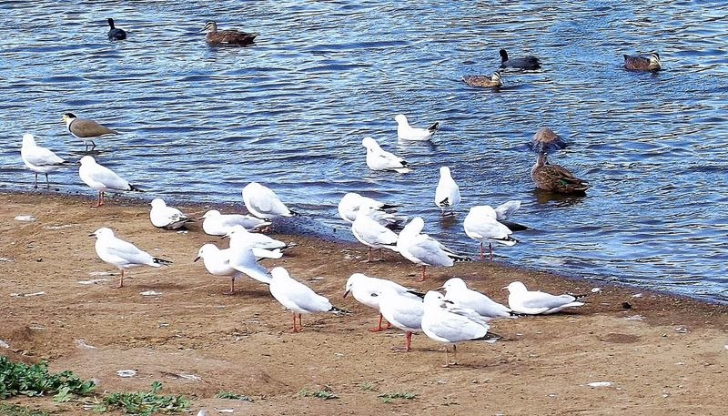 Bird Photography Australian Wildlife Birds Nature At The Park No Filter