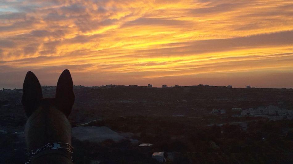 Sunset Orange Color Sky Cloud - Sky Malinois Dog Beauty In Nature Malinoislife Nature