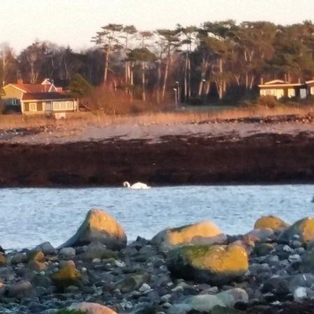 En solig kväll på stranden i Nyhmnläge! Hus Tang Vatten Sten strand svantallarsolhimmeläng
