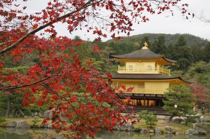 At 鹿苑寺(金閣寺) Kinkaku-ji Temple Autumn Colors Historical Sights Kinkakuji Kyoto, Japan Mapleleaf Seeing The Sights