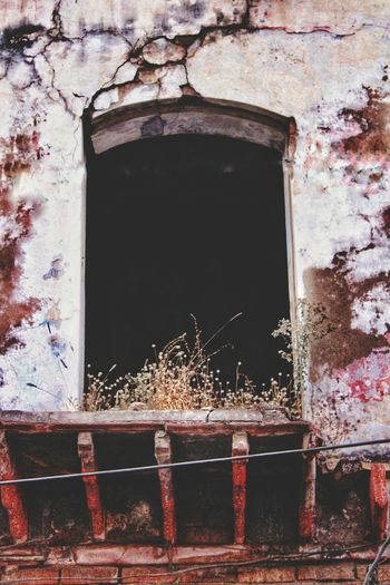 Nature On Your Doorstep Windows_aroundtheworld Empty No People Forlorn Abandoned Places Streetphotography_color Derelict House Abandoned Building Adapted To The City