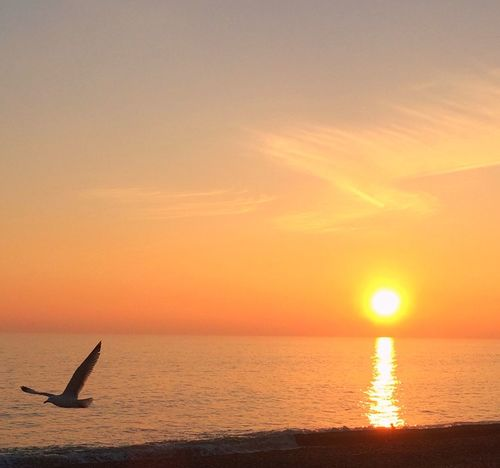 Seagull at sunset . Sunset Sea Nature Water One Animal Sun Sky Beauty In Nature Scenics Silhouette Horizon Over Water No People Animal Themes Outdoors Seagull Bird Flyingbirds Romantic