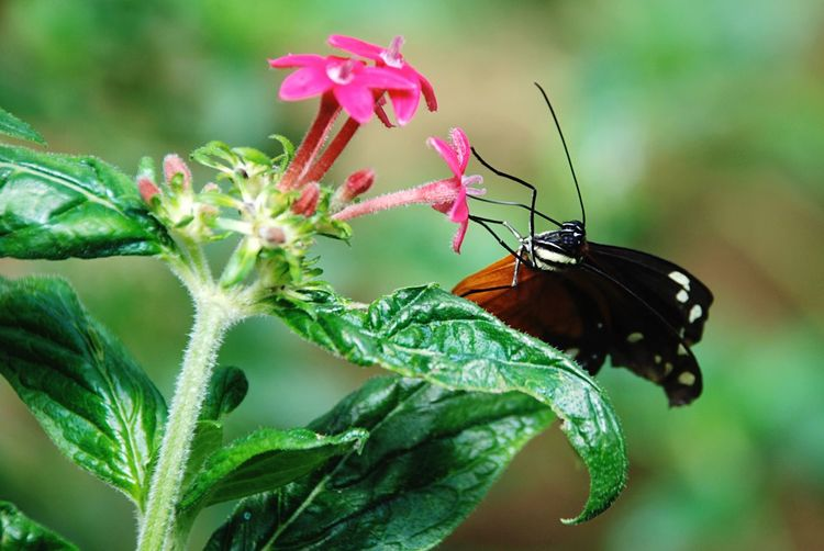 Feeding butterfly Animal Wildlife Animal Themes Animal Animals In The Wild Invertebrate Insect One Animal Plant Close-up Flower Beauty In Nature Fragility Nature