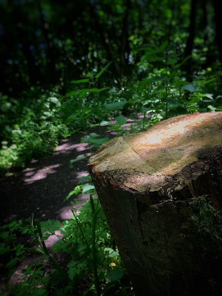 Forest Nature Log Wood - Material Tree Tree Stump No People Tree Trunk Moss Outdoors Focus On Foreground Day Growth Beauty In Nature Close-up