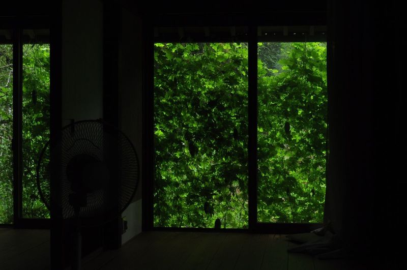 Trees seen through window in forest