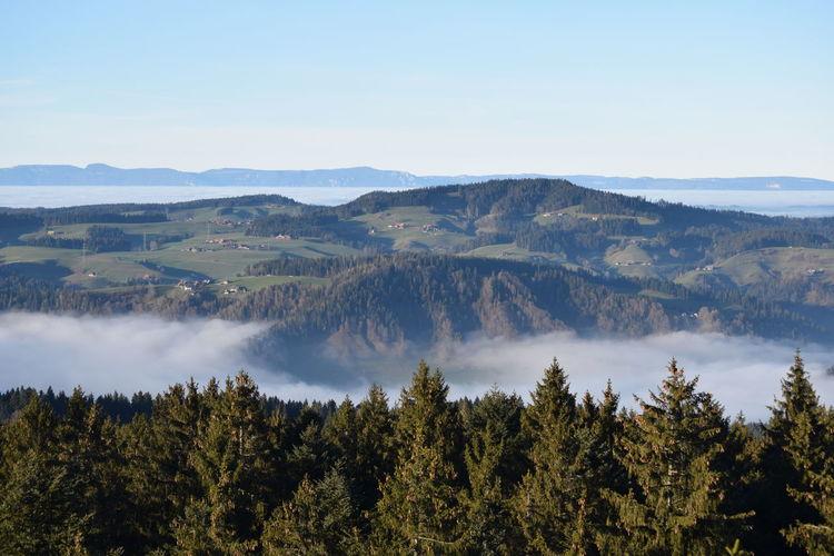 Switzerland Tree Water Mountain Forest Fog Pine Tree Pinaceae WoodLand Sky Landscape