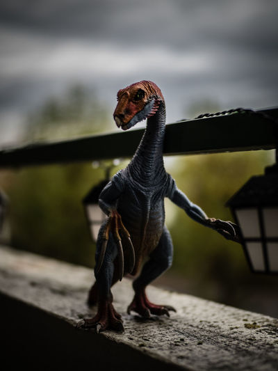 Animal Themes Claws Close-up Dark Sky Dinosaur Doomed Kid's Toys Menacing No People One Animal Schleich Threatening Toy