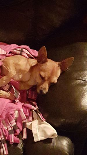 Peanut My Dog Dog❤ Doglovers Dog Sleeping