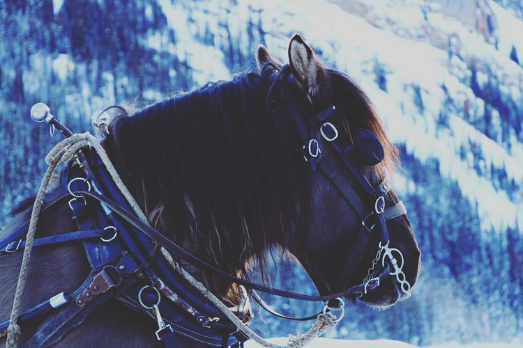 Sleigh ride horse at Lake Louise. First Eyeem Photo Lake Louise  Sleighride Horse Showcase: February Majestic Winter CanonT5i Alberta Mountains Beautiful Nature Canada Photography Photo Nature