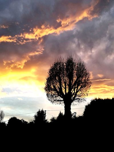 Tree Sunset Silhouette Mountain Tree Trunk Pine Tree Dramatic Sky Pinaceae Cloudscape Single Tree First Eyeem Photo
