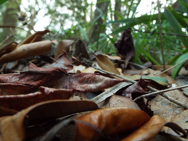 Autumn Autumn Colors Autumn Leaves Green Color Ground Floor Beauty In Nature Brown Close-up Fall Forest Floor Forest Photography Fragility Leaf Nature No People Old Outdoors Seasons Selective Focus Woods