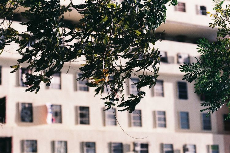 Building Exterior Architecture Built Structure Tree Plant Building Residential District Day Nature No People City Outdoors Branch Focus On Foreground Window House Growth Sunlight Plant Part Full Frame Apartment Low Cost Flats Low Cost Flat View