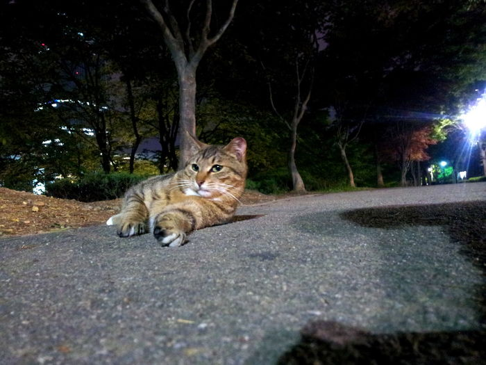 Lake Cats Animal Themes Cat Feralcat Nature Cats Night Photography No People Road