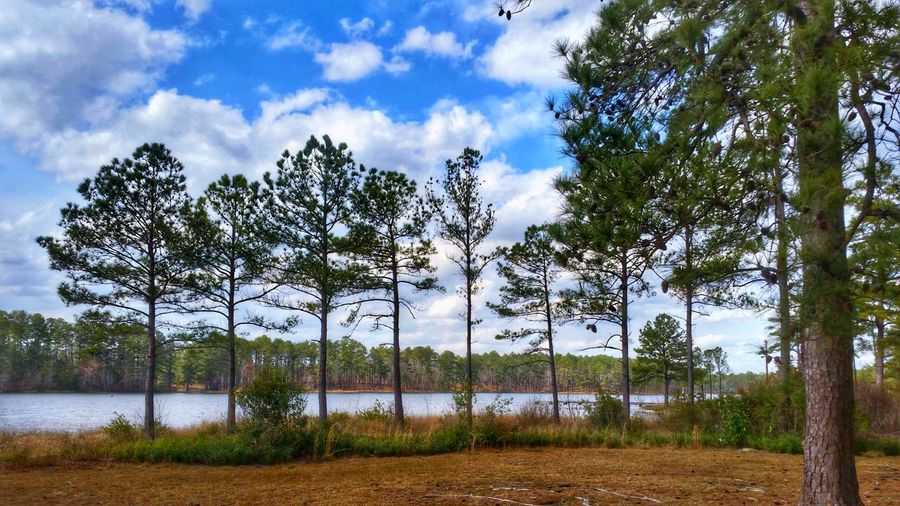 Peace Among the Trees -- HDR Hdr_Collection Hdr Edit Tree Trees Woods Forest Lake Lake View Lakeside Water Water_collection Nature Beauty In Nature EyeEm Nature Lover Sky Cloud - Sky Clouds And Sky Growth Outdoors No People Tranquility Tranquil Scene Scenics Landscape