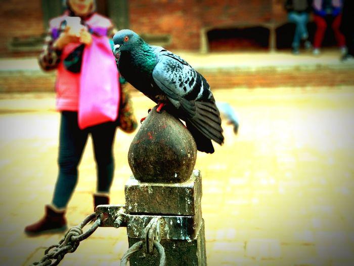 pigeon Life In Winter Krishna Mandir Patan Traveller's Shot EyeEmNewHere