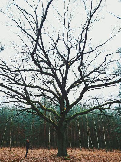 Big tree Learn