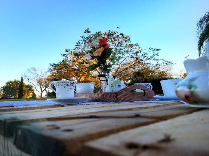 Tree Sky Day Outdoors Tea Tea Time Coffe Coffee Time