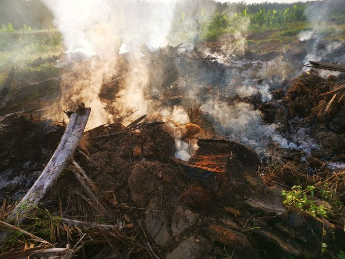 Palm oil slashed tree burning in smoke