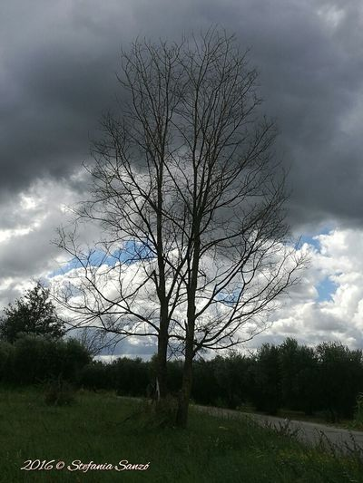 Bare Tree Tree Cloud - Sky Living In The Country  Country Landscapes Countryand Clouds Beauty In Nature Nature Cloudy Landscape Cloud Cloudy Landscape