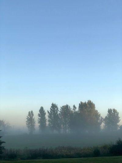 Foggy Treeline Sky Environment Landscape Nature Rural Scene Clear Sky