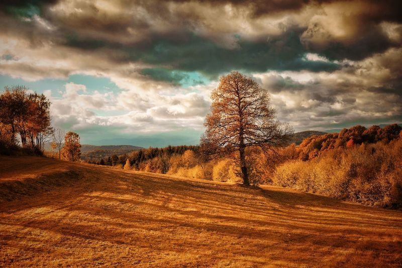 It´s a good day to have a good day.... A Photo Like A Painting Mystical Atmosphere Autumn Vienna Alps Austria Idyllic Melancholic Landscapes Capture The Moment Sky Tree Cloud - Sky Nature Beauty In Nature Tranquility Tranquil Scene Scenics Landscape Bare Tree Field Daily Inspiration Outdoors Fuji Xpro2