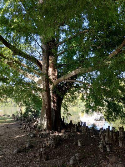 Tree Branch Tree Trunk Forest Sky