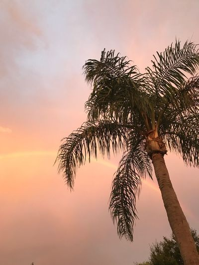 Morning Rainbow Florida Palm Tree Tree Low Angle View Sunset Sky Beauty In Nature Scenics Nature Growth Tree Trunk Tranquility Idyllic Silhouette No People Outdoors Day