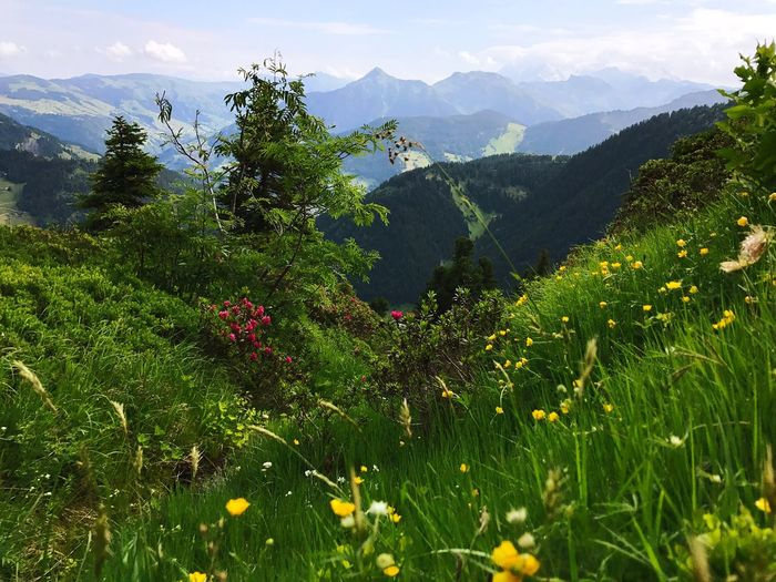Alps Mountain Plant Growth Beauty In Nature Tree Green Color Scenics - Nature Tranquility Mountain Range Nature No People Tranquil Scene Day Non-urban Scene Land Flowering Plant Flower Landscape