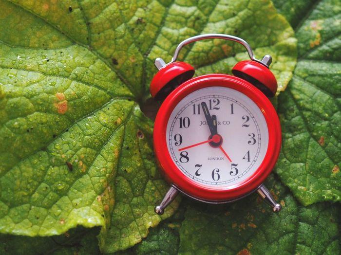 Close-up of clock on leaf