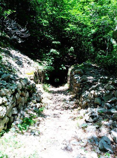 El camino/The road Road Beautiful Nature EyeEm Nature Lover Inthewoods Tunel Camins Que Duen A... Caminos Caminando