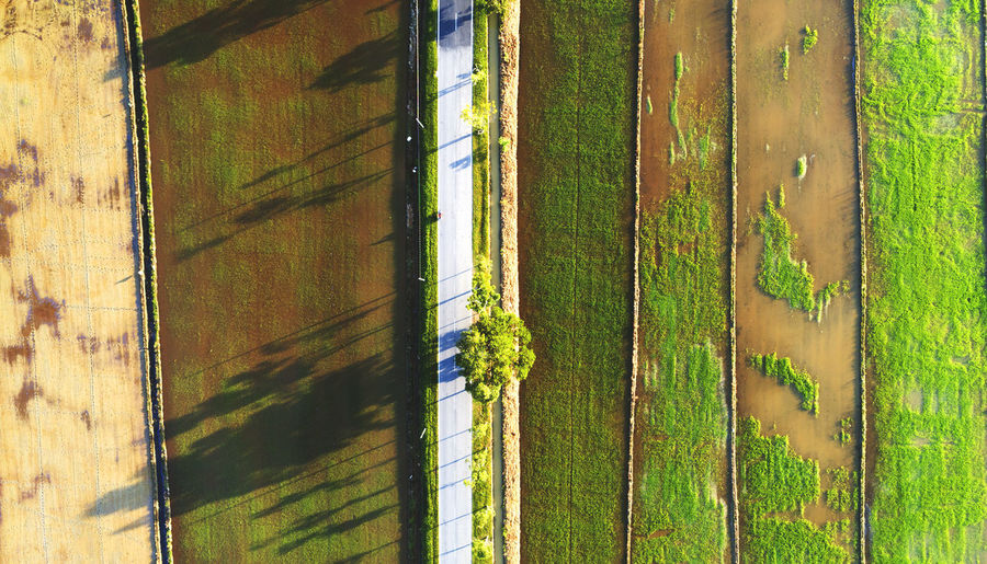 Road and farmland created beautiful symmetry lines as view from above. Bamboo - Plant Beauty In Nature Close-up Day Field Grass Green Color Growth Landscape Nature Nature, Landscape, Green, View, Rural, Farm, Agriculture, Field, High, Grass, Environment, Summer, Land, Aerial, Air, Beautiful, Sky, Food, Grow, Top, Plant, Harvest, Pattern, Earth, Ground, Natural, Survey, Angle, Flying, Above, Background, Country, Terr No People Outdoors Rural Scene Scenics