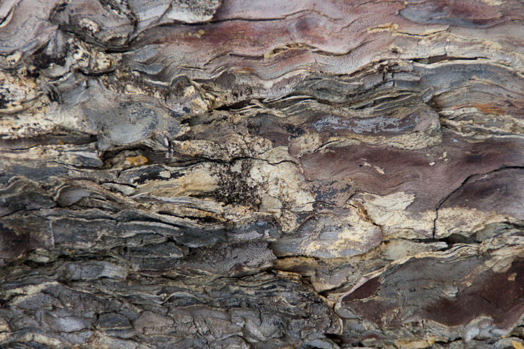 Wood Bark Bark