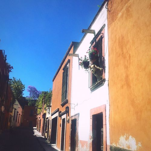 Building Exterior Clear Sky Sky Blue Sky Spring Primavera Colonial Colonial Architecture Old Town Mexico Guanajuato Dog Samoyed Doggie Doggieinthewindow First Eyeem Photo