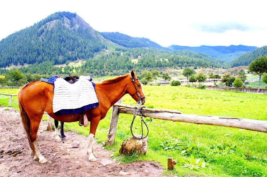 🌿🐴🌿 Porcón farm in Cajamarca-Perú❤ Animal Themes Mountain Range Mountain Horse Landscape Nature Field Scenics Grass Beauty In Nature Sky Tranquil Scene Wonderful EyeEmNewHere Travel Destinations EyeEm Nature Lover EyeEm Gallery Laviniafenton First Eyeem Photo Outdoors