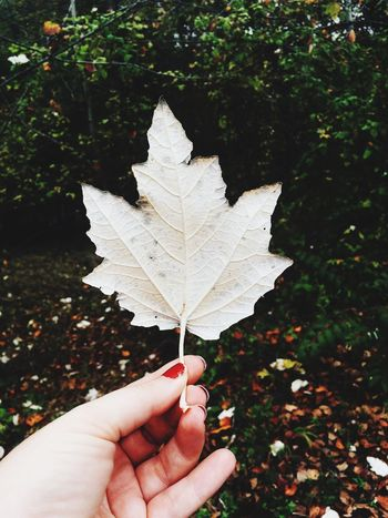 White leaf, chipped nails Leaf Autumn Real People Human Hand Change Nature Tree