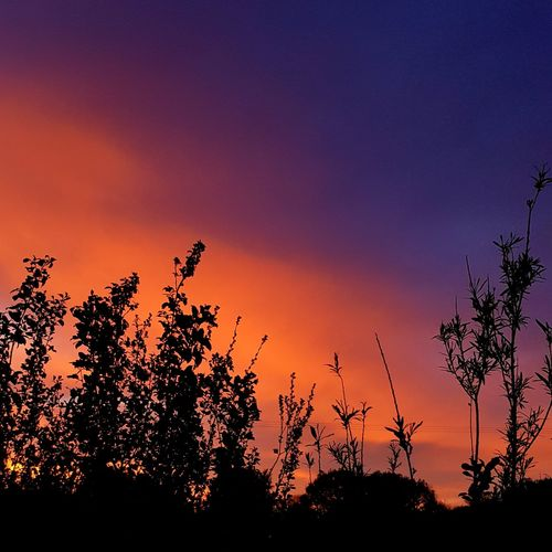 colourful sunset over Cambridgeshire Sunset Silhouette Multi Colored Heat - Temperature Backgrounds Dramatic Sky Environment
