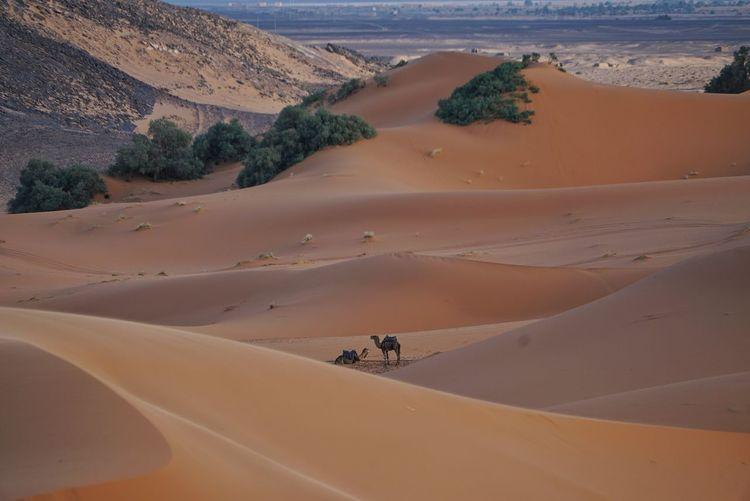 Scenic view of sahara desert