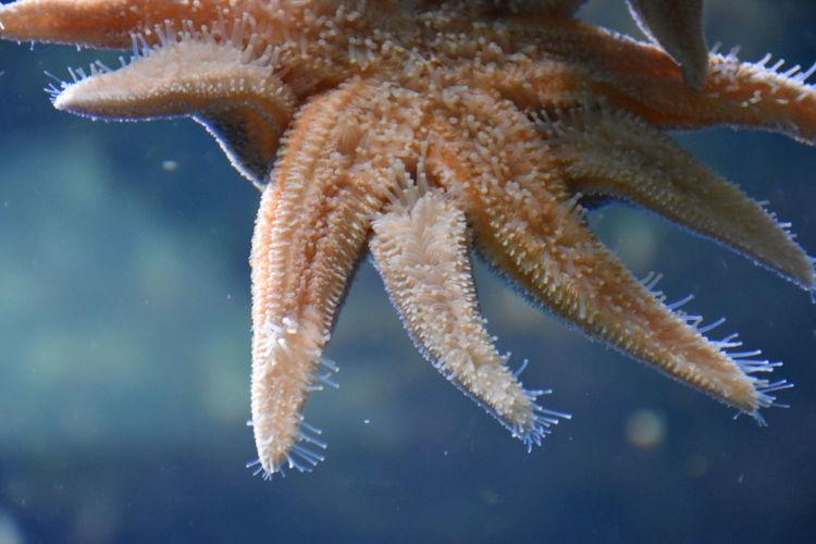 Holidays in Russia россия Aquarium Photography Sea Star