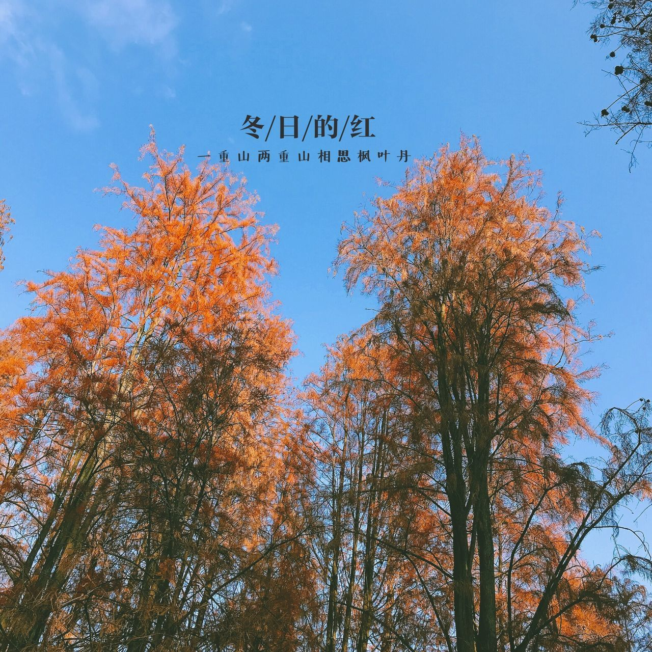 tree, low angle view, autumn, change, text, growth, day, outdoors, branch, no people, nature, sky, leaf, beauty in nature