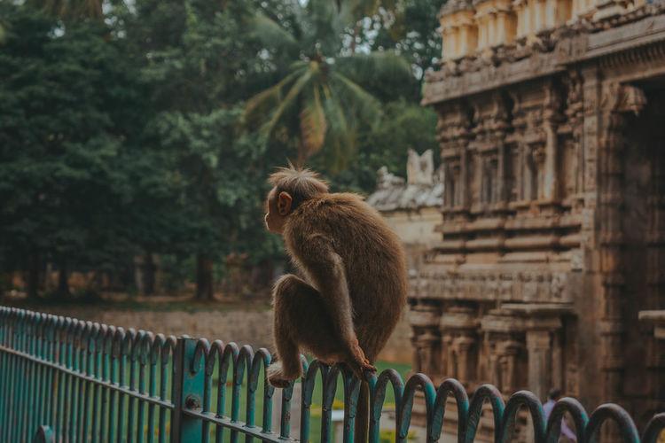 Monkey sitting on fence
