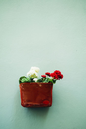 Close-up of red rose on table against wall