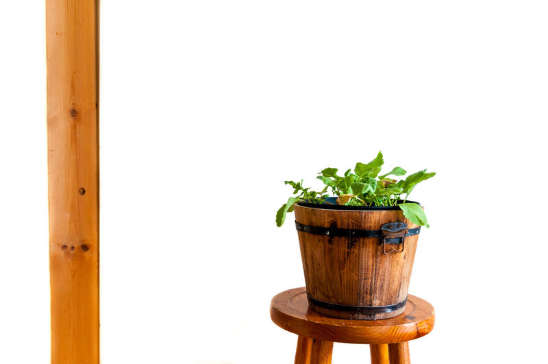Close-up Day Food And Drink Freshness Growth Healthy Eating Indoors  Nature No People Plant Potted Plant White Background Wood - Material