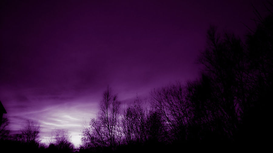 Violet Purple Nature Tree Scenics Tranquility Night No People Tranquil Scene Outdoors Sky Landscape Beauty In Nature