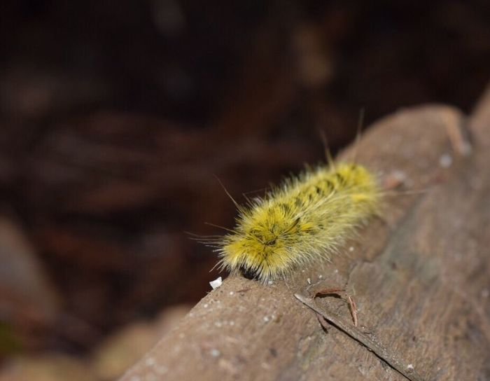 Tiny creature on a fallen redwood tree at Big Basin Redwood State Park Nature Woods Insect Photo Insect Photography Insectsofinstagram Caterpillar Tree Beauty In Nature Outdoors No People Close-up Nature Photography Naturelovers Natural Beauty California California Redwoods